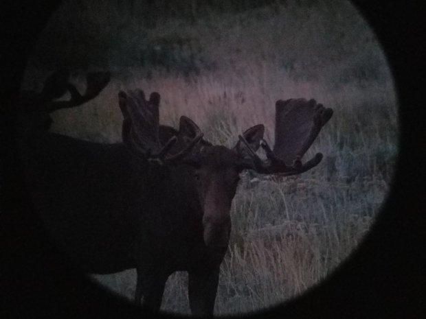 Score this moose - MonsterMuleys com