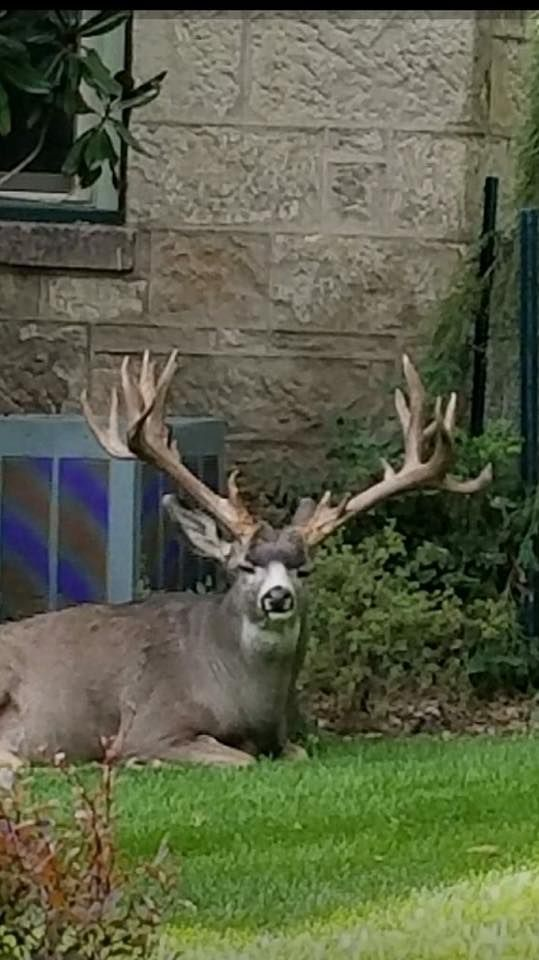 King Of Carson City Sheds Monstermuleyscom