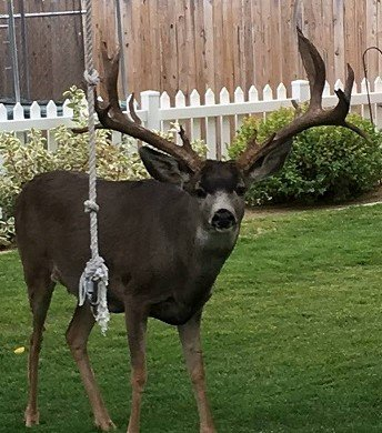 King Of Carson City Buck Monstermuleyscom