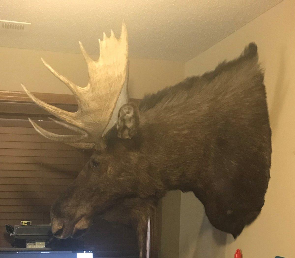 1992 NS Uinta Moose 2 (2).jpg