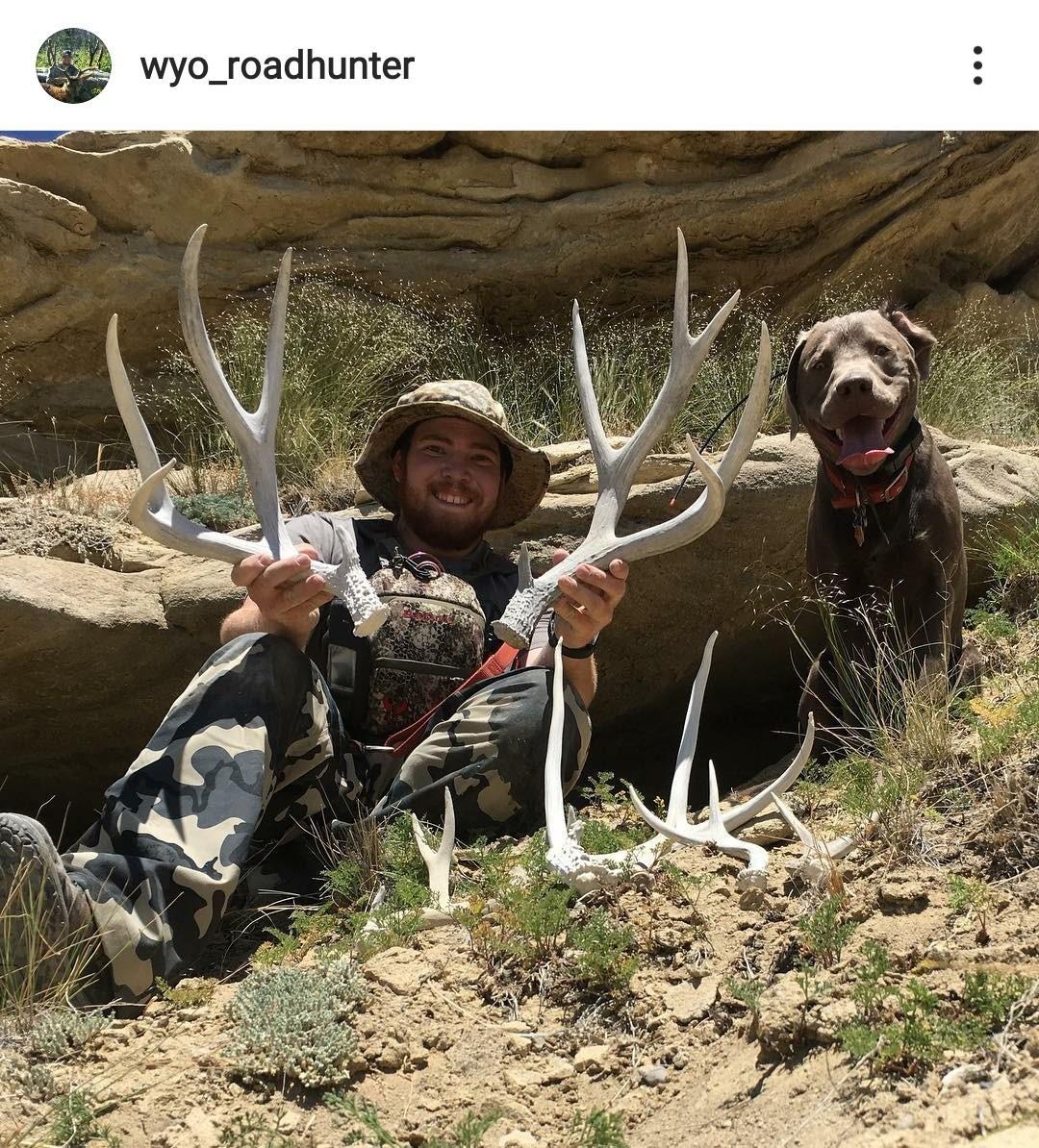 2017 deer 2.jpg