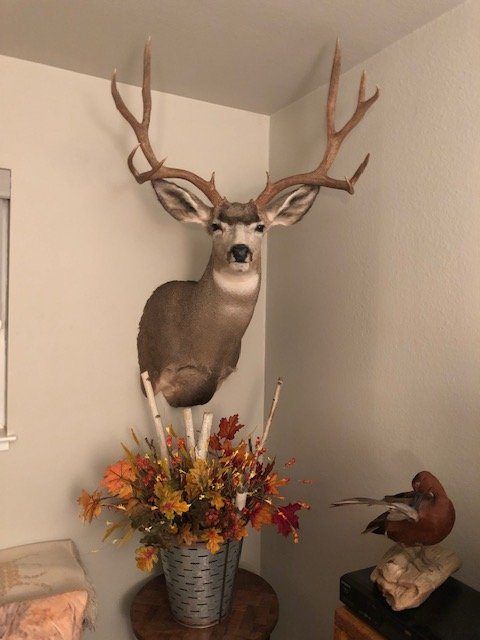 2017  Nevada Buck Mount.jpg