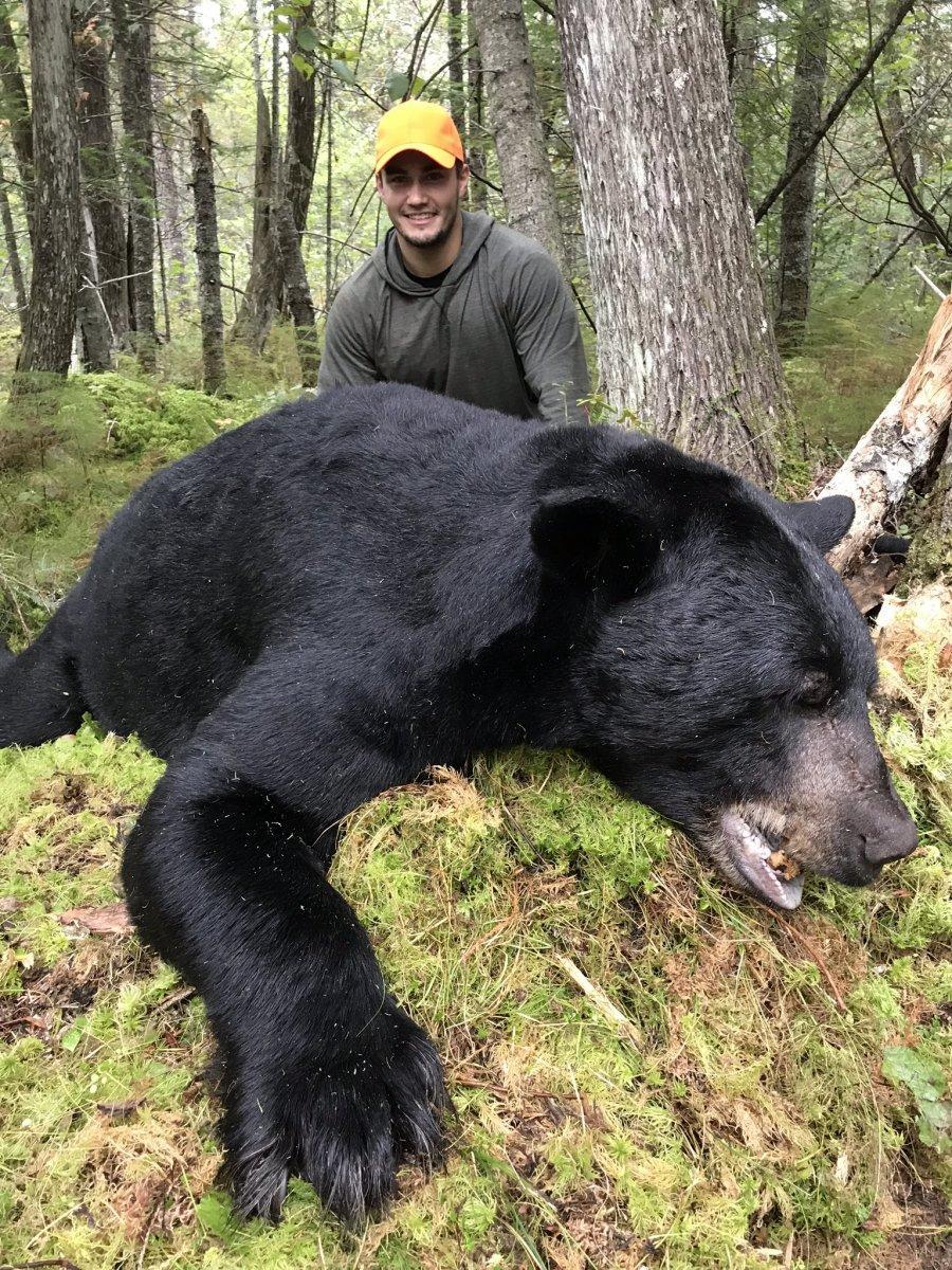 2018 MI Bear-1.jpeg