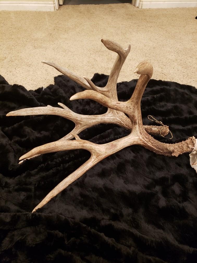 2020 deer 1.jpg