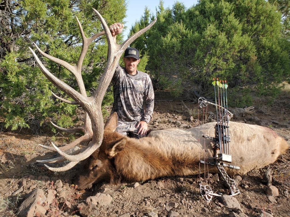 AZ Elk.JPG