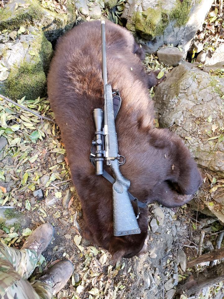 Bear 1.jpeg