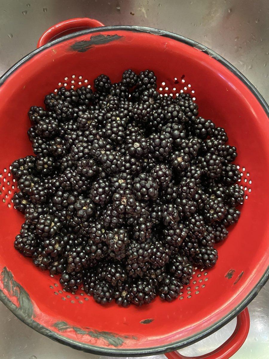 Berrys 1.jpg