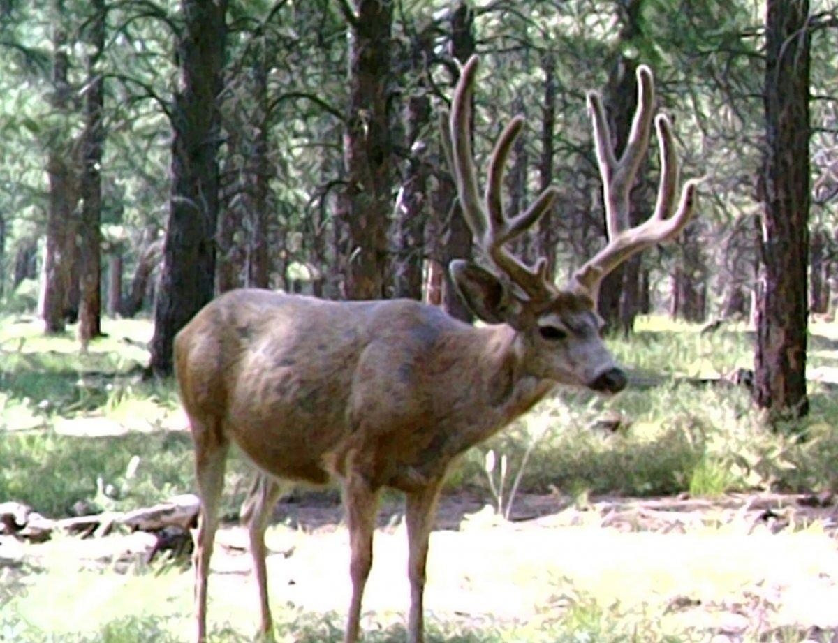 Big Buck 8-1.jpg