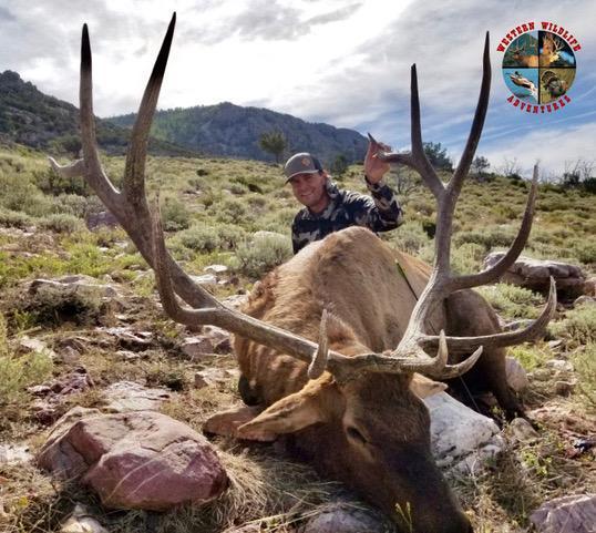 big-nevada-bull-elk-2.jpg