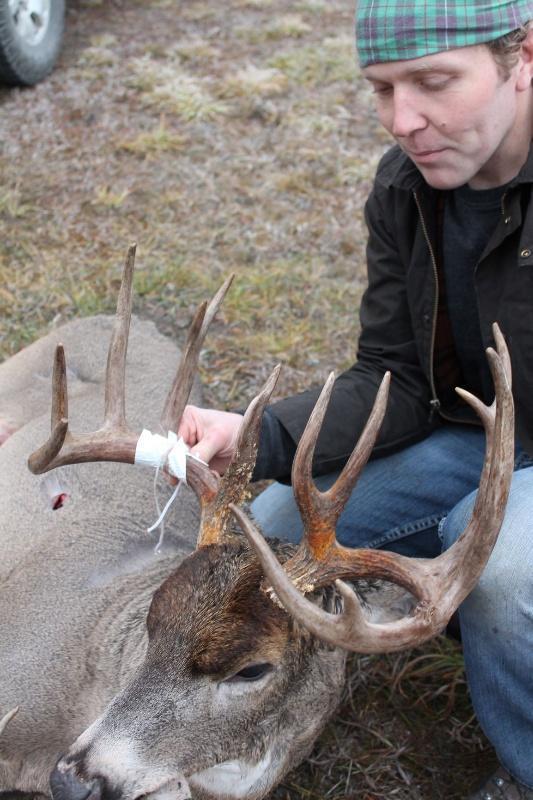 deans buck 6-533x800.JPG