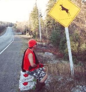 deer-crossing.png