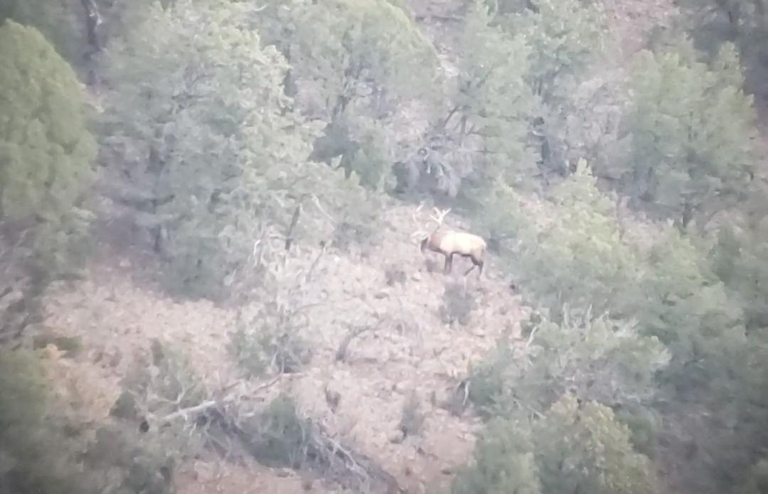 Elk on Hoof 1.jpg