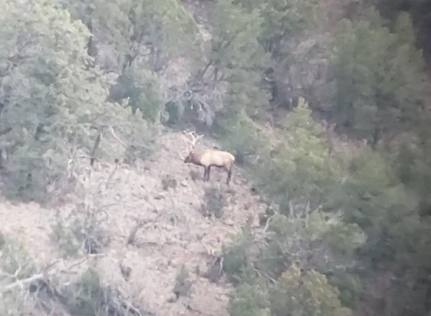 Elk on Hoof 3.jpg