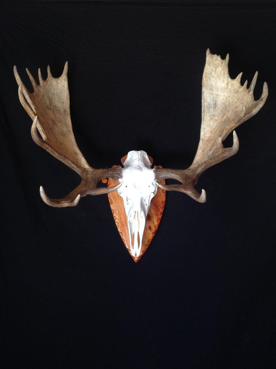 euro moose.jpeg
