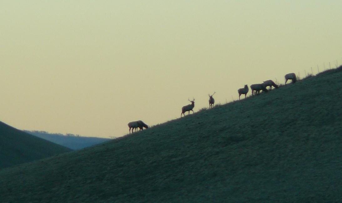 herd2012.jpg