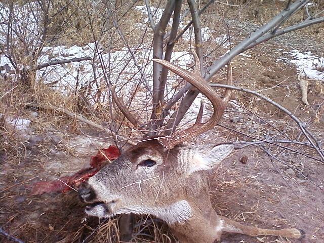 Horn hunting 2 (1).jpg