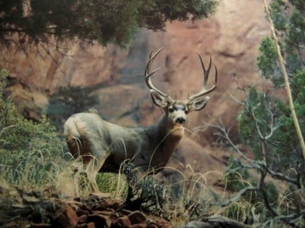 Muzzy buck1.JPG