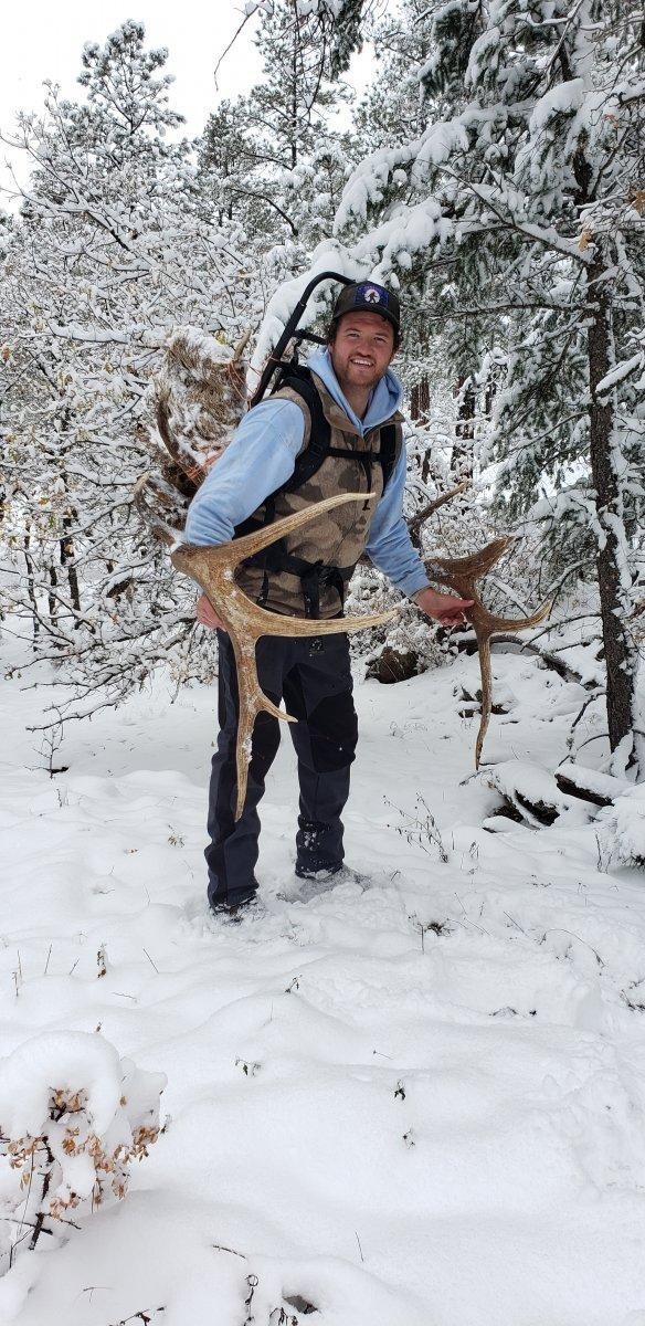 Packing Elk.jpg