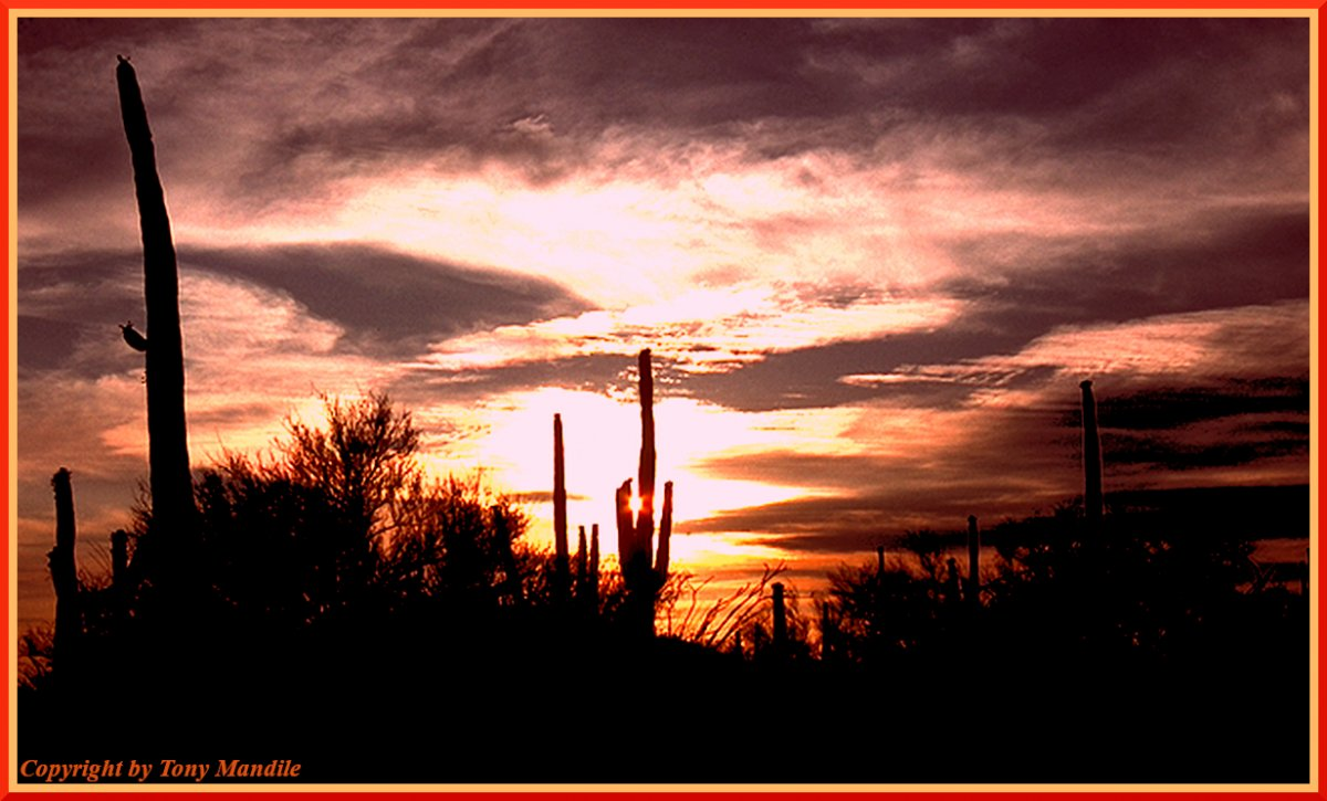 SaguaroNP2.jpg