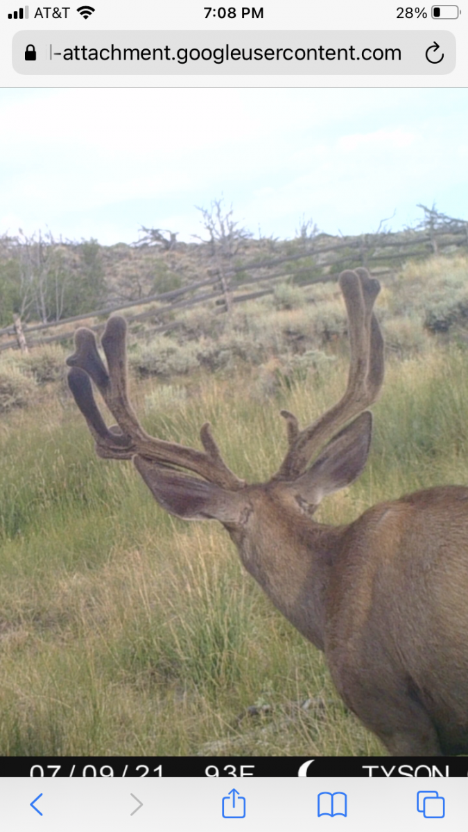 trail cam 3.png