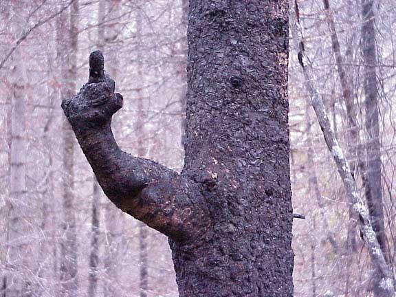 trump tree.jpg