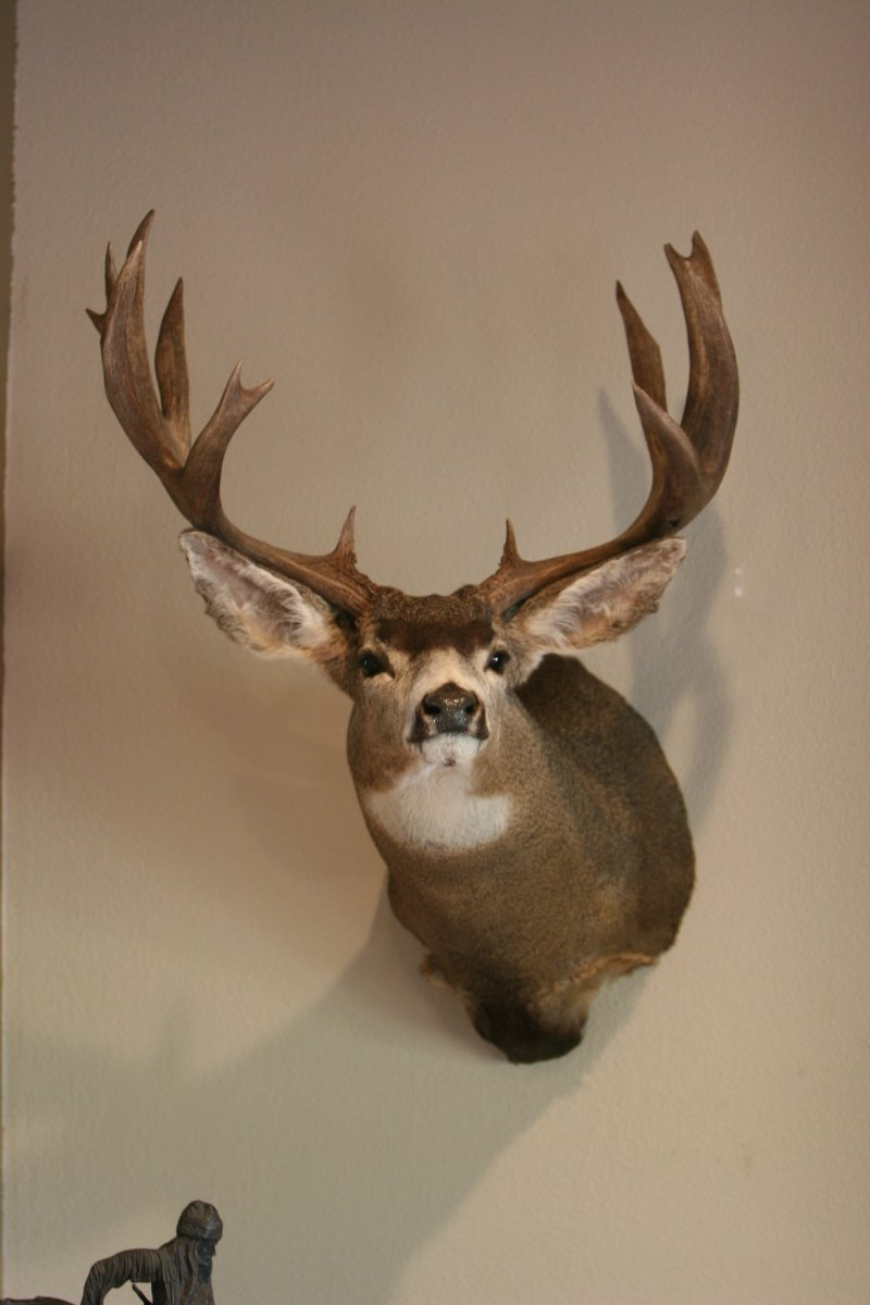 Wide Buck 187.JPG
