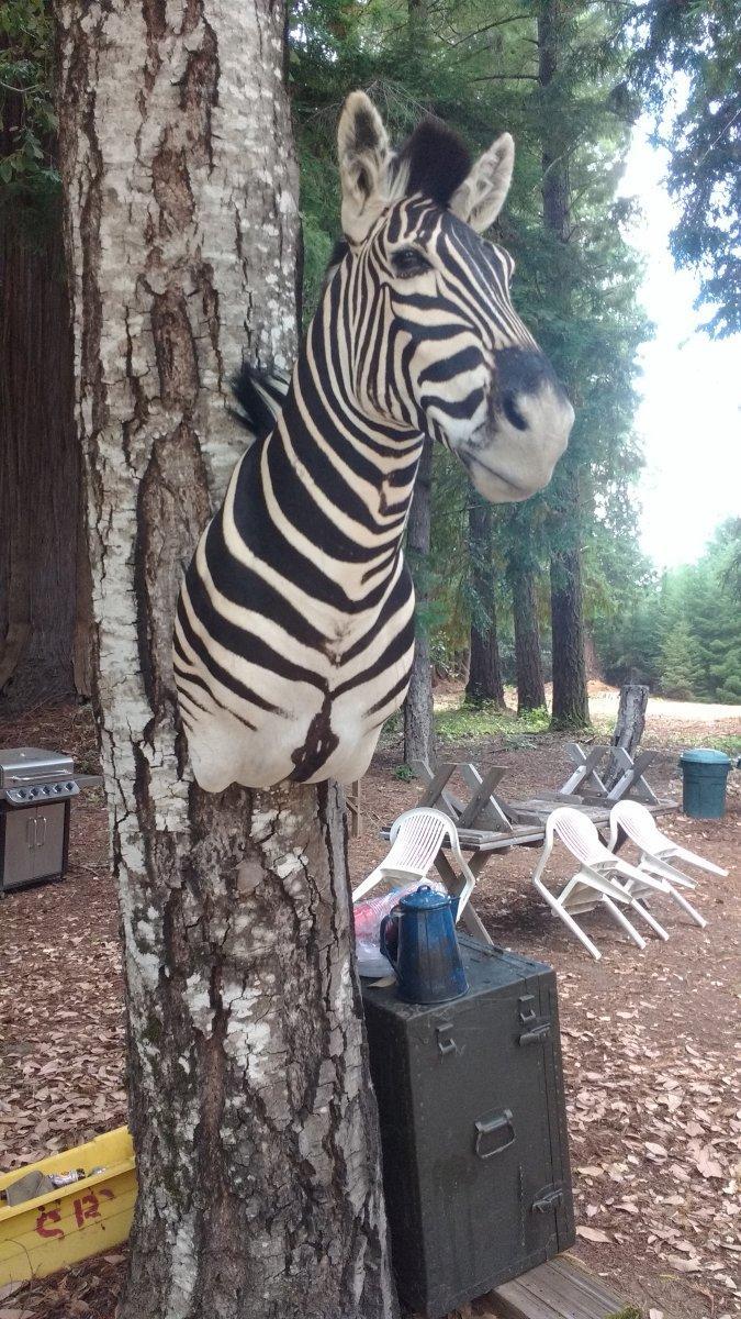 Zebra Mount.jpg