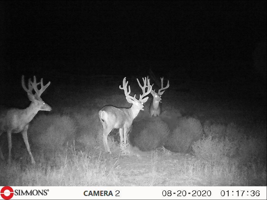 Zieser Buck Trail Cam 8 20 20.JPG