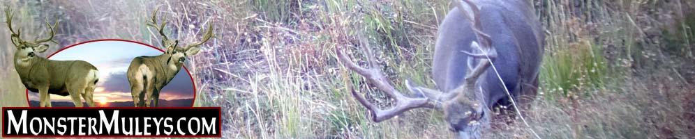 monster-muleys-mule-deer-elk-header-100321.jpg