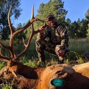 New Mexico Bull Elk