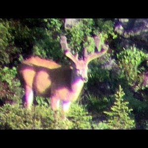 Tripod/Cheater Buck - MonsterMuleys.com
