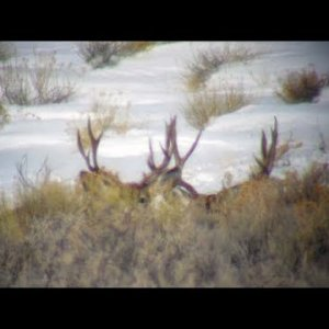 Winter Scouting II 2019 - MonsterMuleys.com