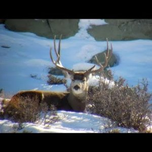 Winter Scouting III 2019 - MonsterMuleys.com