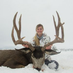 Heavy Trophy Buck