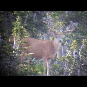 Good Backpack Trip for Bucks! - MonsterMuleys.com
