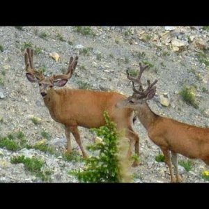 Some Solid Bucks Found - MonsterMuleys.com