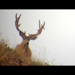 Awesome Bucks on the Hill - MonsterMuleys.com