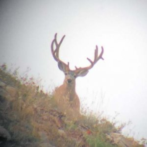 High Country Big Buck