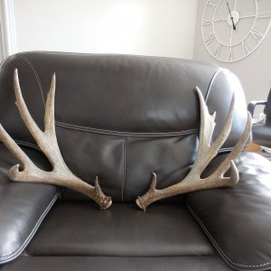 Big Set of Antlers