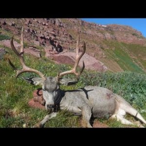 Colorado 4x5 Trophy Buck Score - MonsterMuleys.com