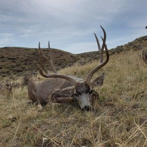 Sweet Wyoming Muley