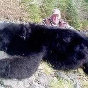 Good Lookin' Black Bear