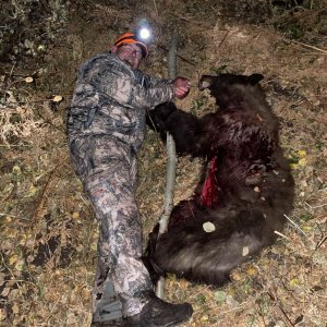 Bear Hunting Fun