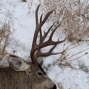 Nevada  Archery Buck 2020 side view.jpg