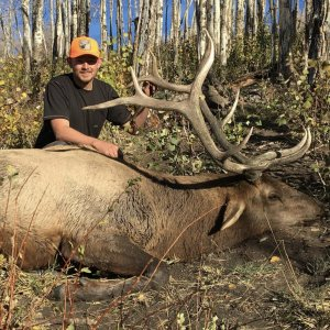 Colorado Bull Elk Hunting