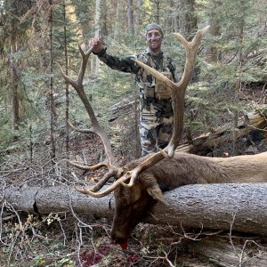 Colorado Unit 61 Archery Bull with Allout Guiding