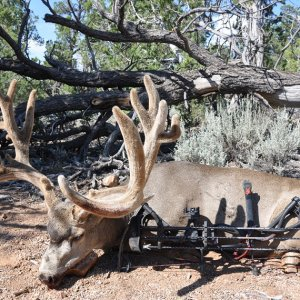 What a buck!!! Archery too!