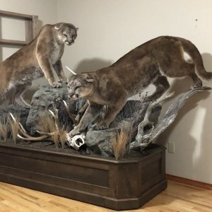 Incredible Taxidermy Work