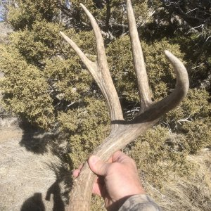 Muley Shed for Buckhorn