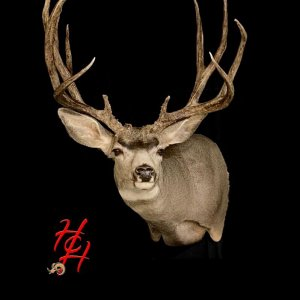Big Buck and Great Taxidermy